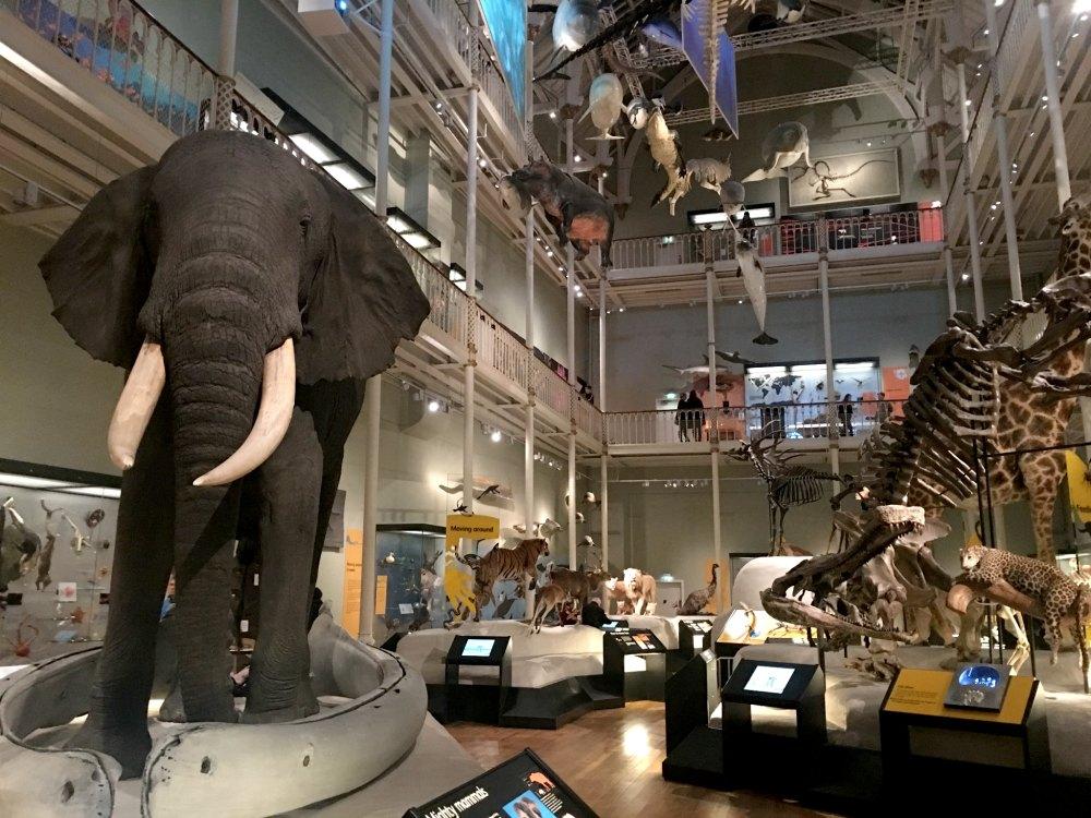 National Museum of Scotland - Edinburgh