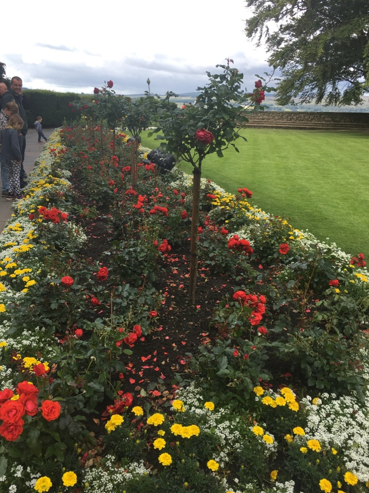 Queen Anne's Rose garden in Stirling Castle